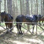 Cavalli Etna - Rifugio Ragabo