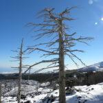 Etna alberi neve inverno - Etna trees winter snow