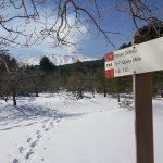Etna sneeuw - neve - snow - Pineta Ragabo
