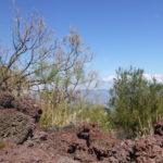 Lava Etna natura